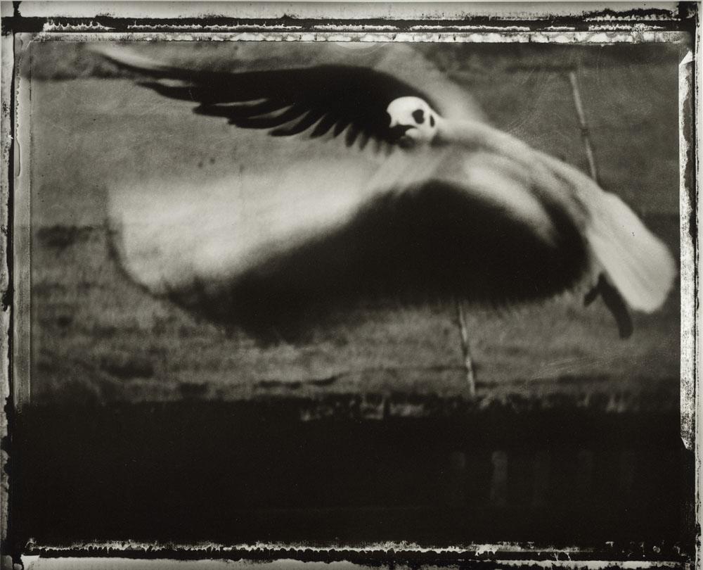 Sarah Moon: Die Möwe, 1998. © Sarah Moon